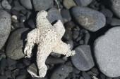 Close up Starfish — Foto Stock