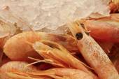 Shrimp — Stockfoto
