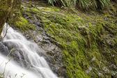 дикая река — Стоковое фото