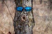 Tree Portrait — Stock Photo