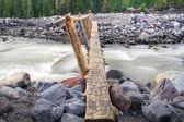 Log Bridge — Stock Photo