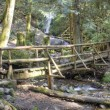Log Bridge — Stock Photo #57038835