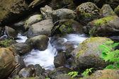 Bunch Creek Falls — Stock Photo