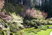 Jardín formal — Foto de Stock