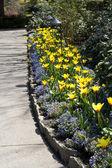 Footpath and Flowers — Stok fotoğraf