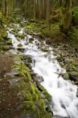 Washington Waterfall — Stock Photo
