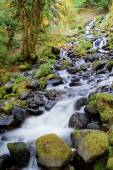 Starvation Creek Falls — Stock Photo