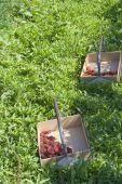 Berry box — Stock Photo