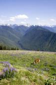 Deer and Mountains — Stock Photo