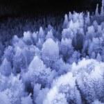 Ice Cave — Stock Photo #67249983