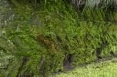 Moss Pattern — Stock Photo