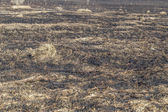 Bruned Grassland — Stock Photo