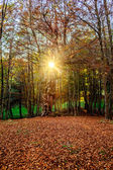 Ormanda günbatımı — Stok fotoğraf