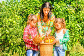 Mother and her Daughters  picking clementines — Stockfoto