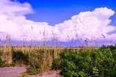 Vegetação perto da praia em Montenegro — Fotografia Stock