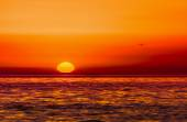 Bird flying over the sea in the sunset — Stock Photo