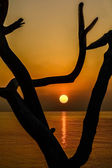 Tree silhouette on sunset over the see — Stock Photo
