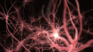Neurone synapse network. Flight through brain. 3D animation. — Stock Video
