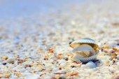Open schelpen op het strand — Stockfoto