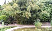 Bed met bamboe — Stockfoto