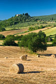Haycock and trees in sunny tuscan countryside, Italy — Stock Photo