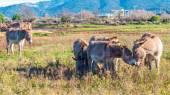 Donkeys in Tuscany, Italy — Stock Photo