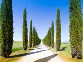 Road and cypresses in Crete Senesy — Stock Photo