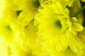Close up of yellow daisy flower — Stock Photo