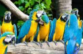 Beautiful macaw bird — Stock Photo