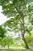 Prachtige groene bladeren op witte achtergrond — Stok fotoğraf