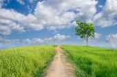 Campo verde con cielo azul — Foto de Stock