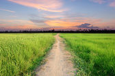 Walkway through green fields to the darkness sky — Stock Photo