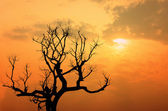 Silhouette of tree branches at sunset — Stock Photo