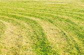 Green grass field background — Stock Photo