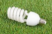 Energy saving light bulbs on green grass background — Stock Photo