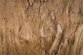 Bark wood texture as natural background — Stock Photo