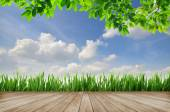 Wooden platform and green grass with blue sky background — Stock Photo