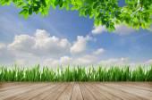 Plate-forme en bois et l'herbe verte sur fond de ciel bleu — Photo