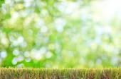 Natural green bokeh as background — Stock Photo