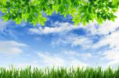 Green grass and green leaves with blue sky background — Stock Photo