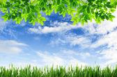 Зеленая трава и зеленые листья с фоном голубого неба — Стоковое фото