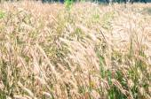 Prairie grass field — Stock Photo