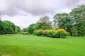 Big tree on green grass field — Stock Photo