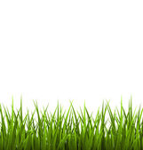 Green grass lawn isolated on white. Floral nature spring  — Vettoriale Stock