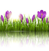 Green grass lawn, violet crocuses and sunrise with reflection on — Stockvector