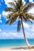Sea and coconut palm — Stock Photo