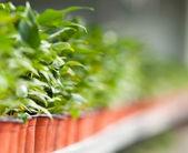 Seedlings — Stock Photo