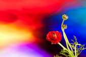 Flowers on artistic colored background. Blank card — Stock Photo