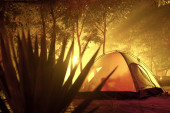 Orange camping tent set up in summer forest — Stock Photo