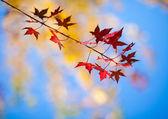 Shining Autumn Leaves — Stock Photo